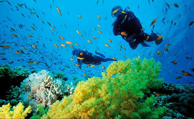 7 Motivos para ser um mergulhador