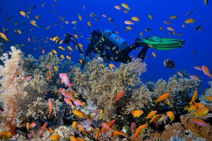 Mergulhe no Mar Vermelho - Blog Arte Academia Dive