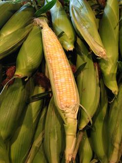 Beans & Greens Farm - crops Corn