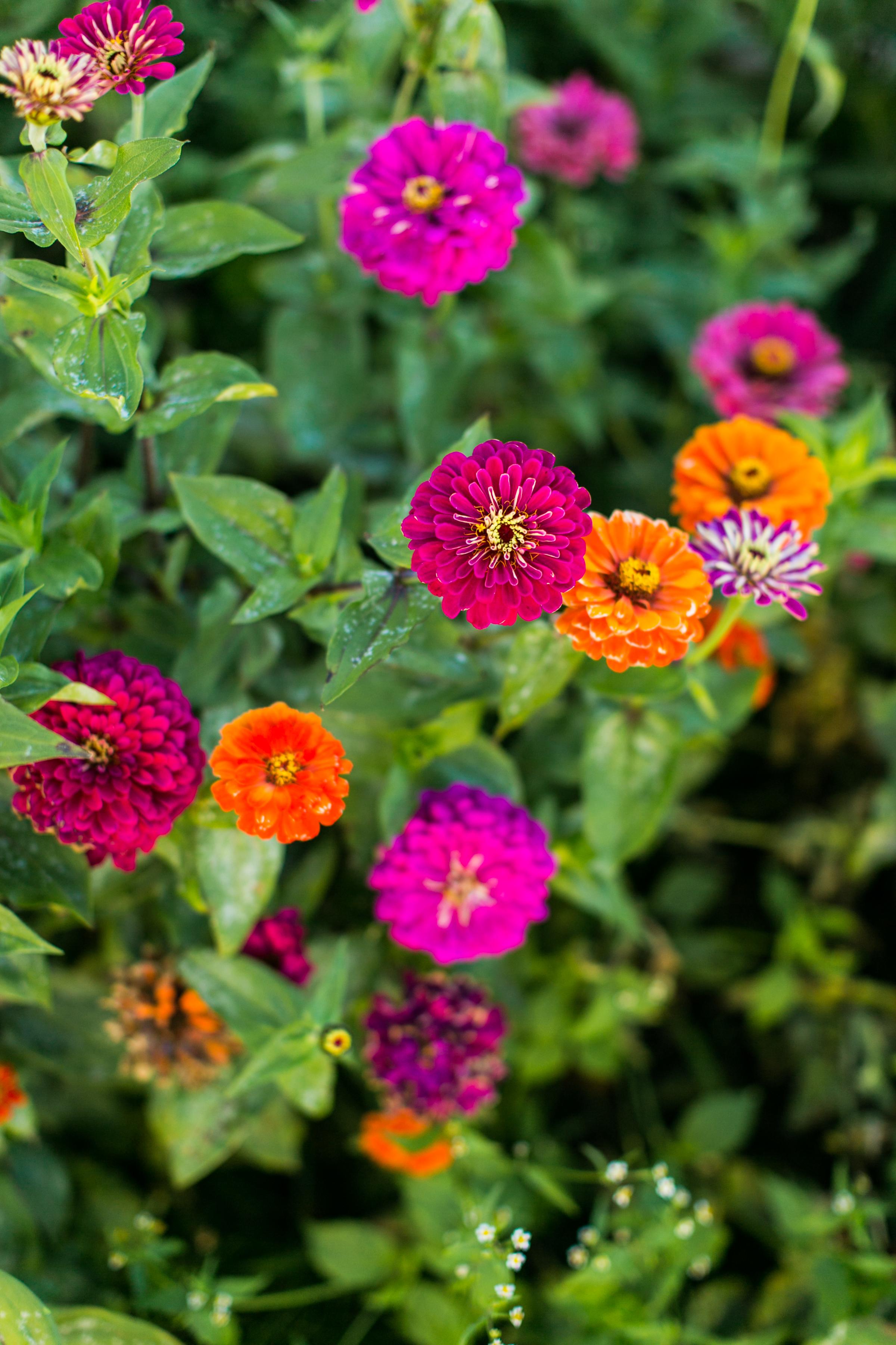 Beans & Greens Farm - Anne Skidmore - cut flowers