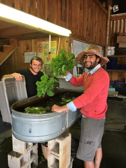 Beans & Greens Farm - employees washbin.
