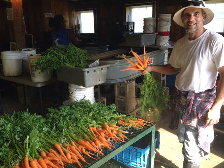 Beans & Greens Farm - Employee Carrots.j