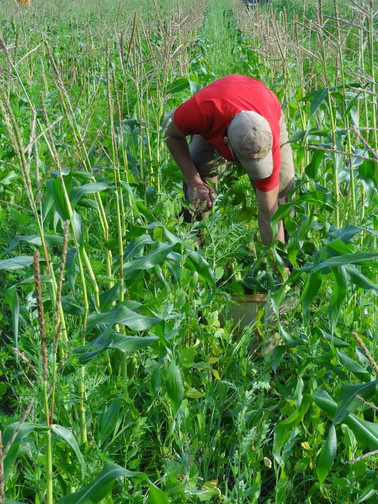 Beans & Greens Farm - employee oustandin