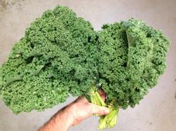 Beans & Greens Farm - crops kale