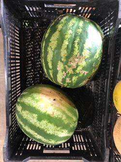 Beans & Greens Farm - Crops Watermelon