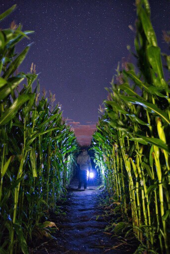 Beans & Greens Farm - Cornmaze Night Lat