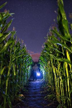 Beans & Greens Farm - Cornmaze Night Lat