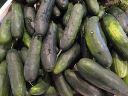Beans & Greens Farm - crop cucumbers