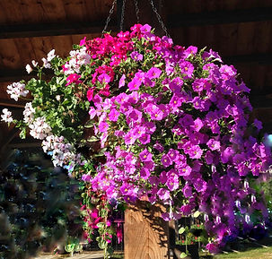 Beans & Greens Farm - flowers hanging ba