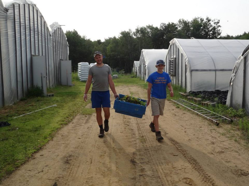 Beans & Greens Farm - employees carrying