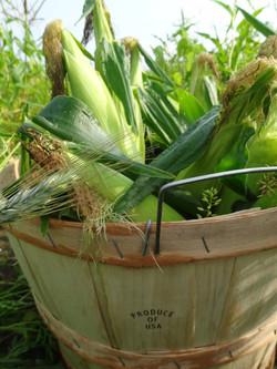 Beans & Greens Farm - Corn Bushel