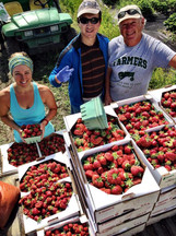 Beans & Greens Farm - crops strawberries