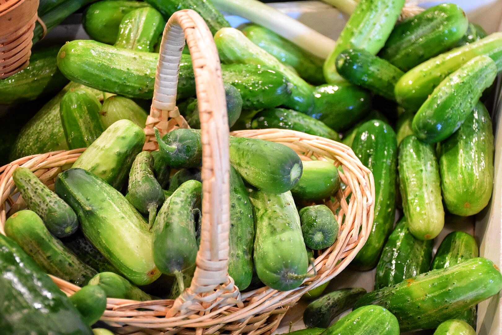 Beans & Greens Farm - crops cucumbers
