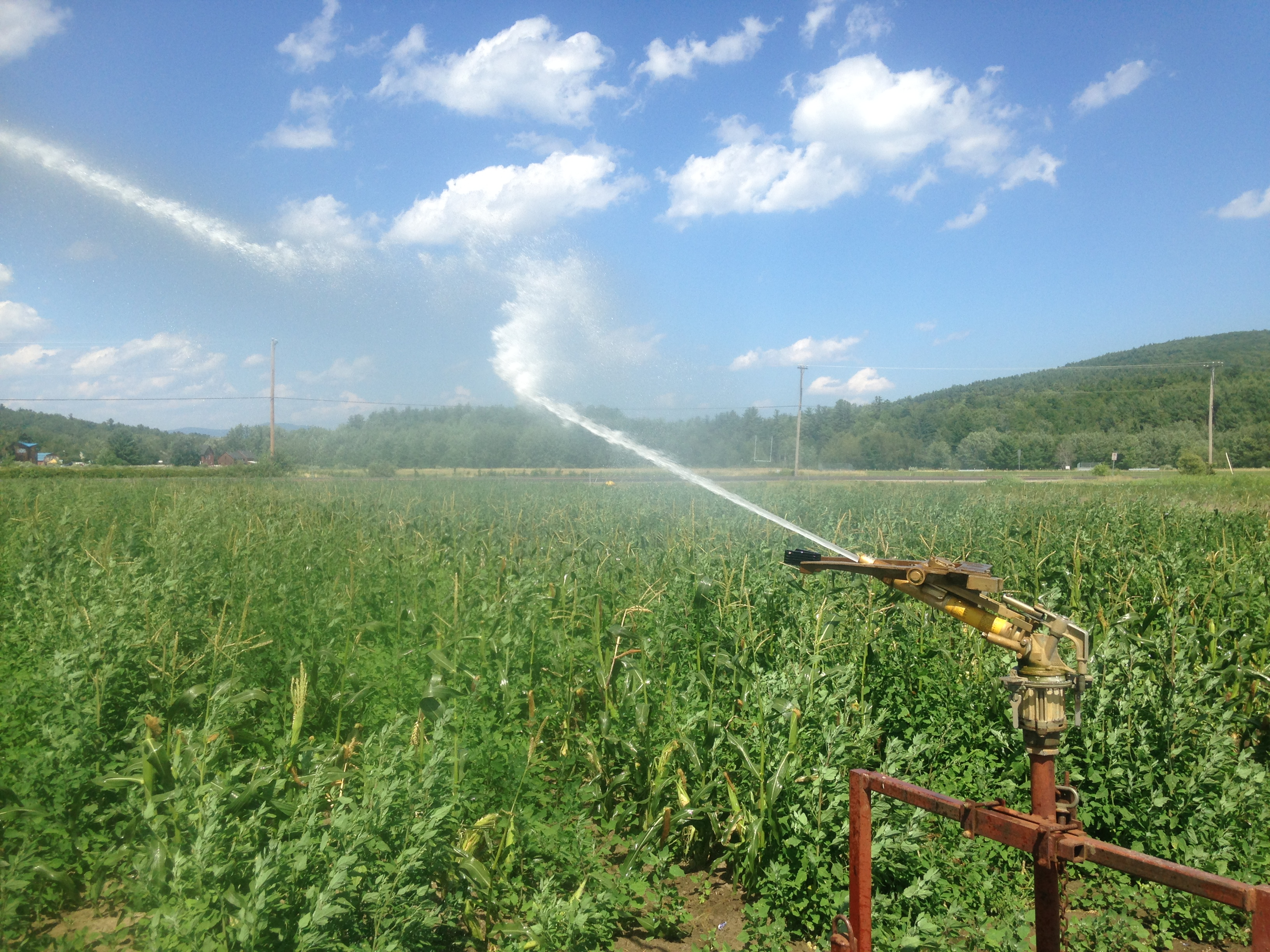 Beans & Greens Farm - crops Irrigating 1