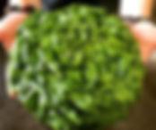 Beans & Greens Farm - Lettuce Head.jpg