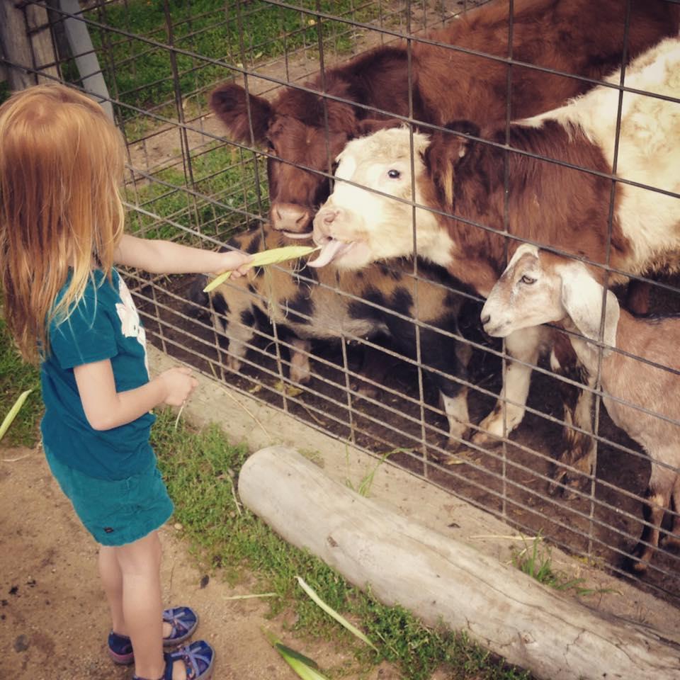 Beans & Greens Farm - barnyard animal fe