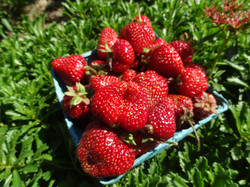 Beans & Greens Farm - Strawberry box