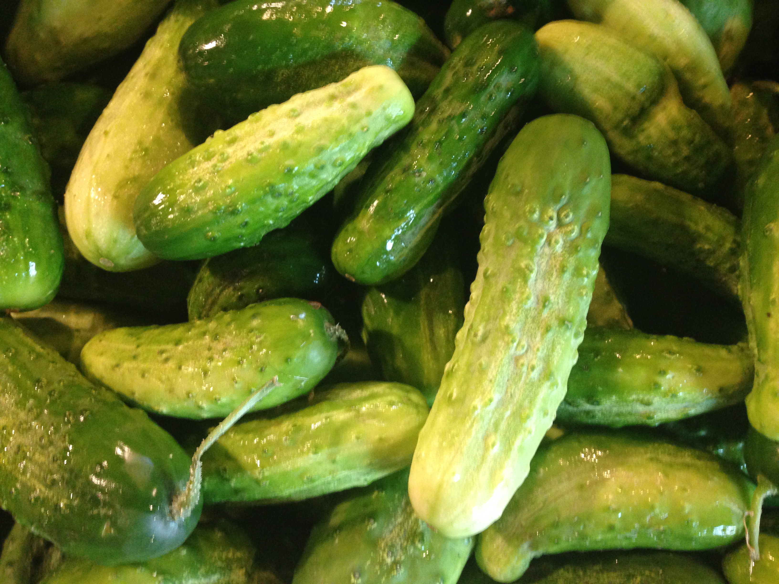 Beans & Greens Farm - crops pickling cucumbers