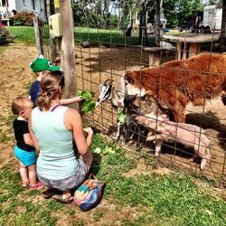 Beans & Greens Farm - barnyard animals family feeding