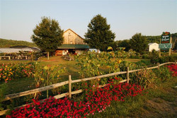 Beans & Greens Farm - Front Lawn