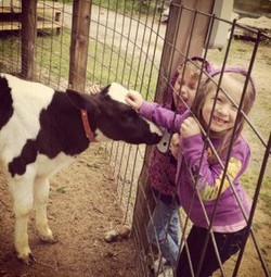 Beans & Greens Farm - barnyard animals c