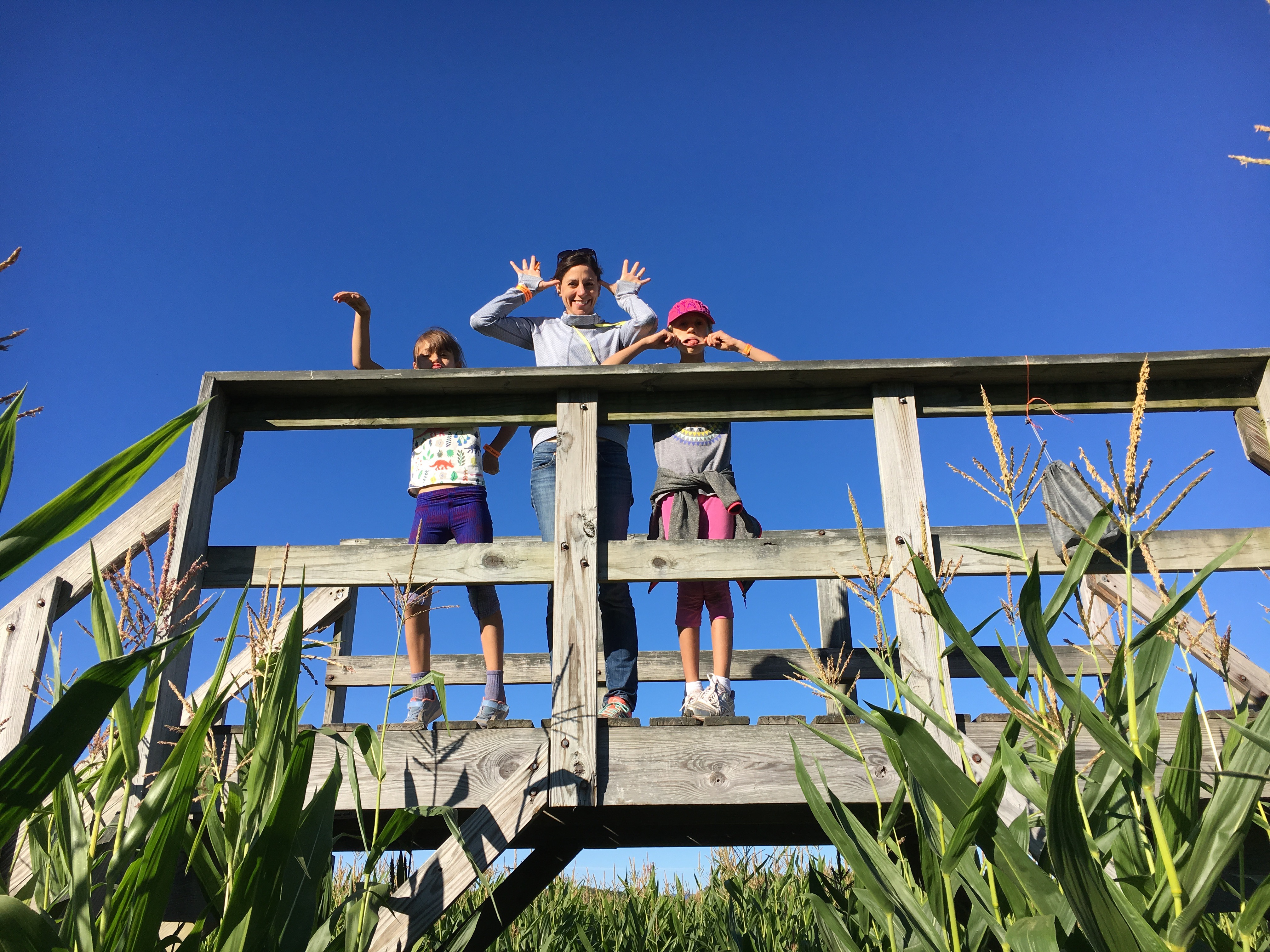 Beans & Greens Farm - cornmaze family fun bridge