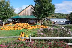 Beans & Greens Farm - farmstand front vi
