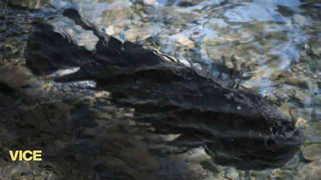 FishMonsterDark_001.jpg