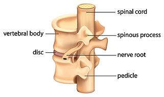 vertebrae-anatomy.png