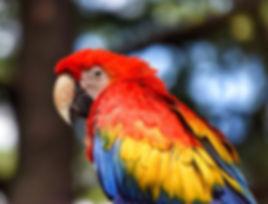 parrot-2791686__340.jpg