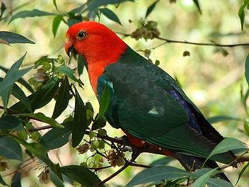 parrot-3620637__340.jpg