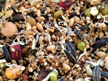 Sprouted Seed & Grains