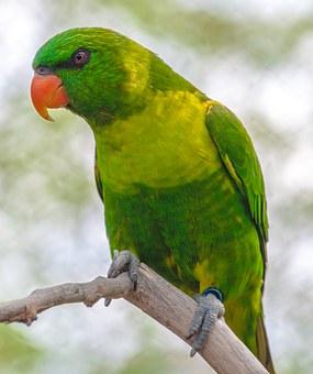 bird-1283775__340
