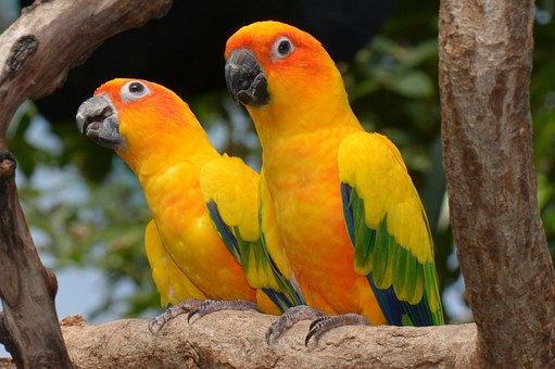 Conures & Quakers