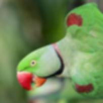 parrot-3197214__340.jpg