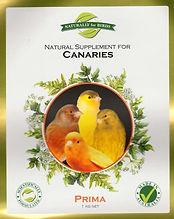 NfB Prima-Canary-e1496641791218.jpeg