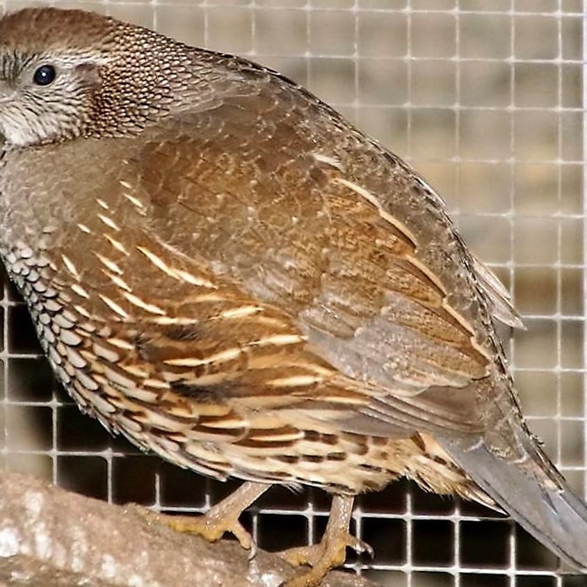 April Aviary Visit