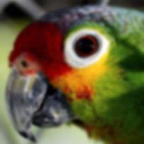 parrot-55293__340.jpg