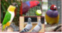 Flite n Flock Logo - Copy.JPG