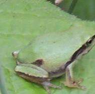 Humedales Fauna 03