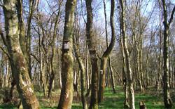 camp-site-chuch-stretton