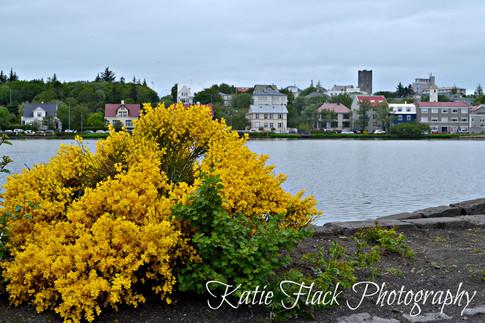 Iceland Houses Watermark.jpg