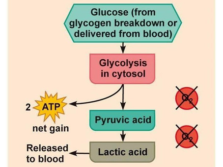 กรดแลคติก (Lactic acid)