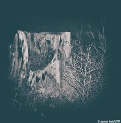 Cistern tree NIK watermark