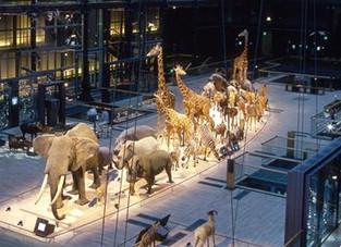 Acta Fabula en représentation ce soir à la Grande Galerie de l'Evolution