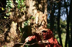 Spectacle Je suis un arbre