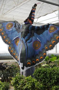 Miss Papillon l'échassier