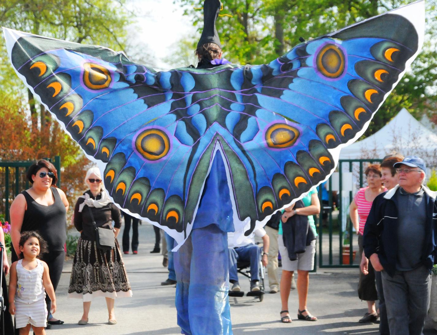 L'échassier Papillon