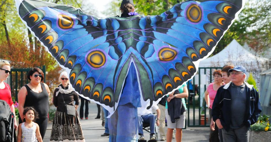 Echassière Papillon