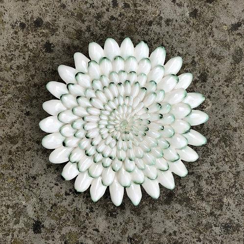 Succulent1